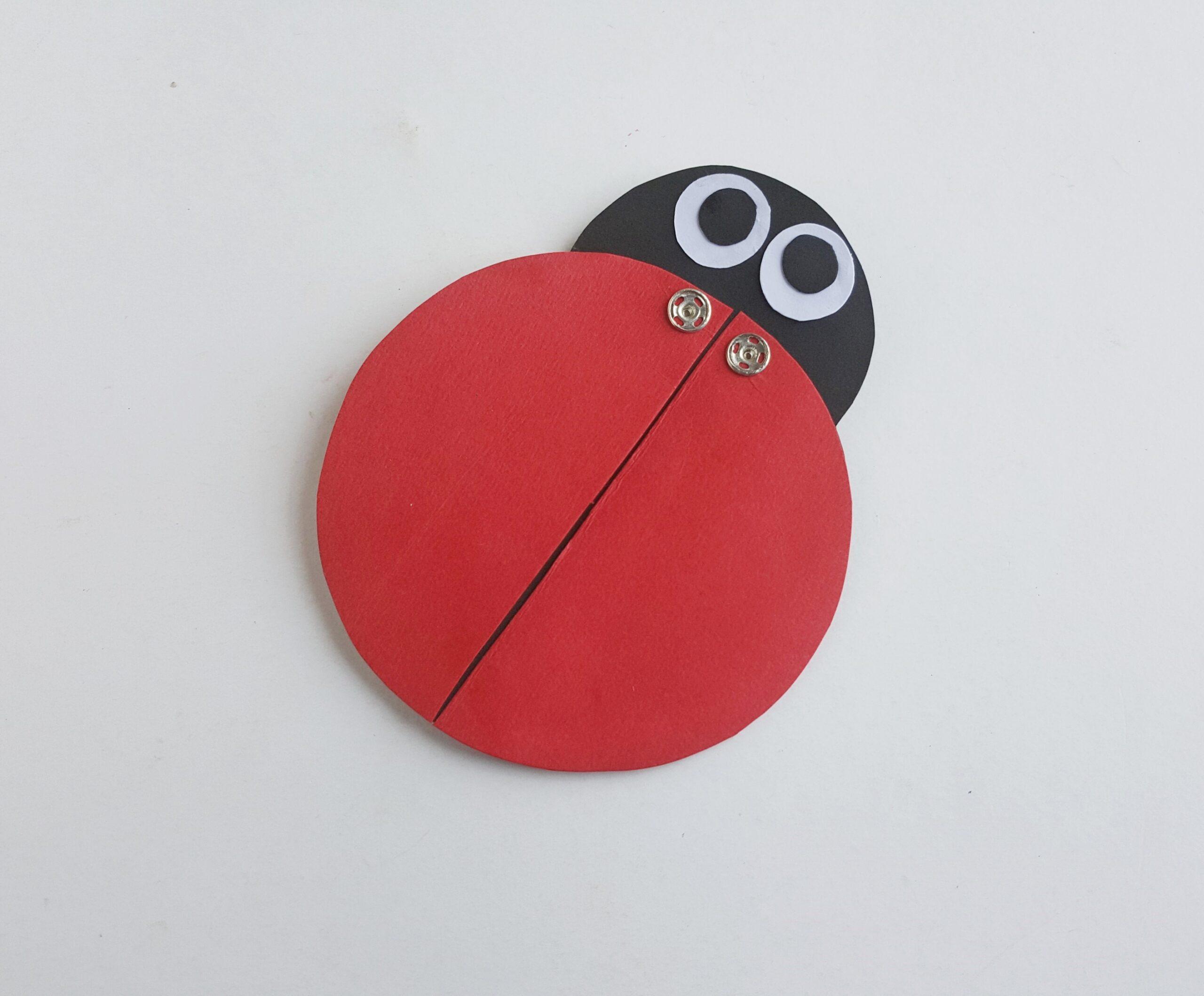 Ladybug Learning Activity Steps