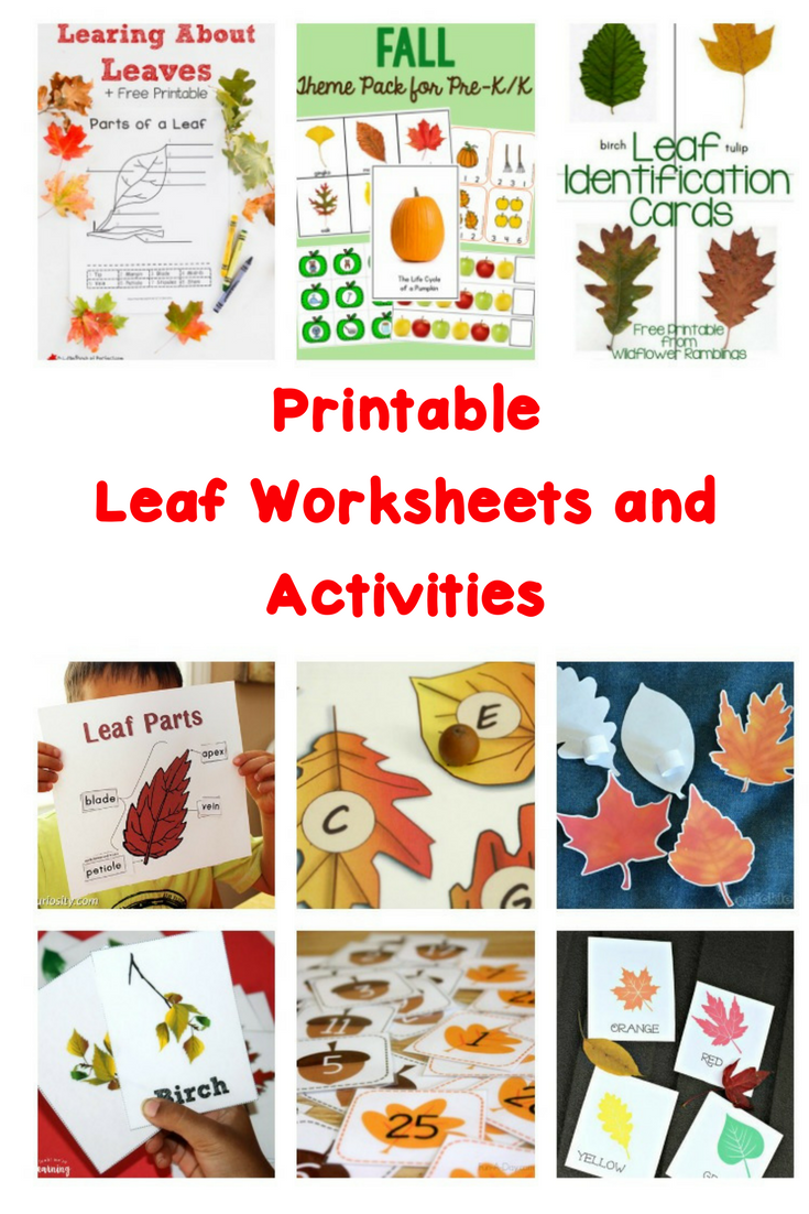 With these Printable Leaf Worksheets and Activities, you will be able to help teach math, science and literacy! Make learning fun!